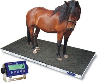 vital_horse_monitoring_masy_ciala