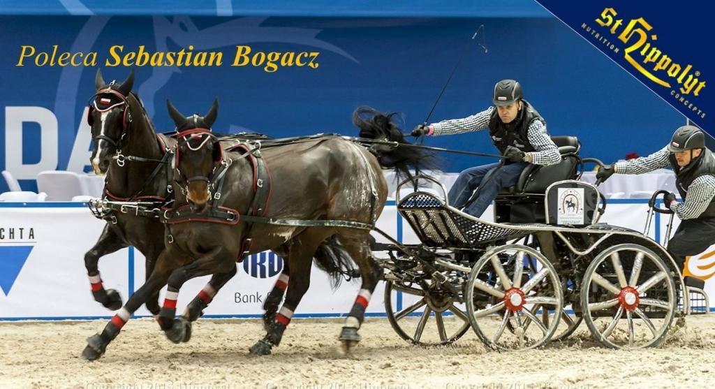 Vital_Horse_St. Hippolyt